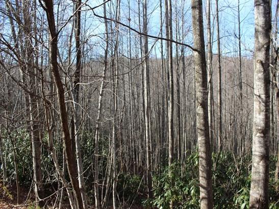 Lot 79  Catawba Falls Trail, Old Fort, NC - USA (photo 5)