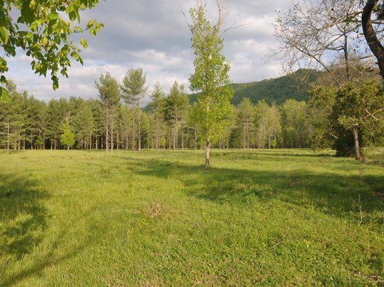 000  Cane Creek Road, Fletcher, NC - USA (photo 5)