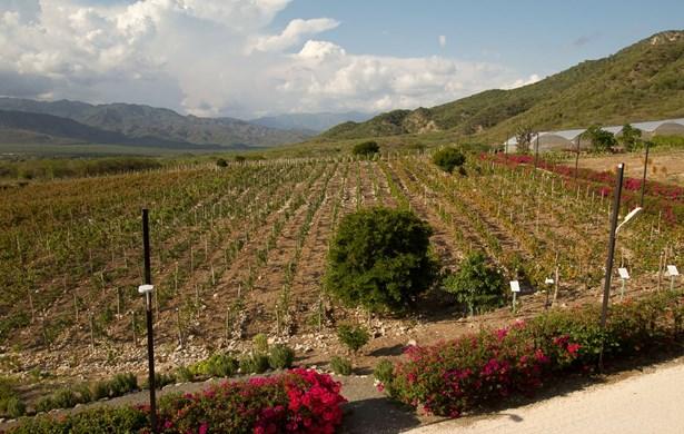 Ocoabay, The Community Of The Vine, Invercargill - DOM (photo 1)