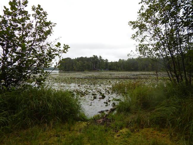 321' Fisherman Frontage,Pickerel Lake (photo 2)