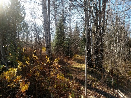 1.37 Private Acres Near RHL (photo 4)