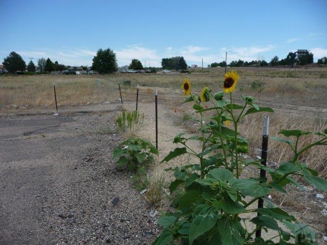 Unimproved Commercial - Pueblo, CO (photo 5)