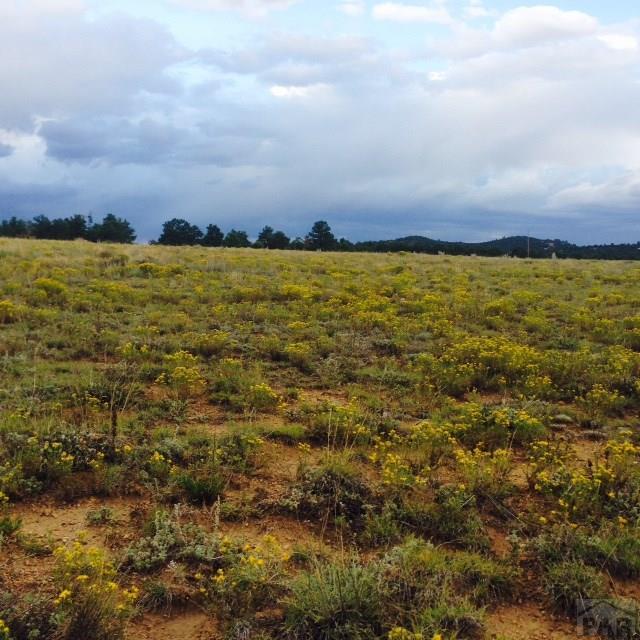 Single Family Land - Cotopaxi, CO (photo 5)