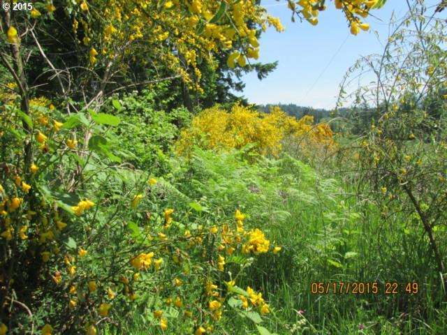 Fern Meadow , Stevenson, WA - USA (photo 2)