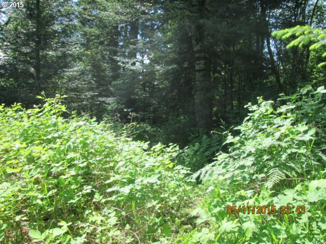 Fern Meadow , Stevenson, WA - USA (photo 5)