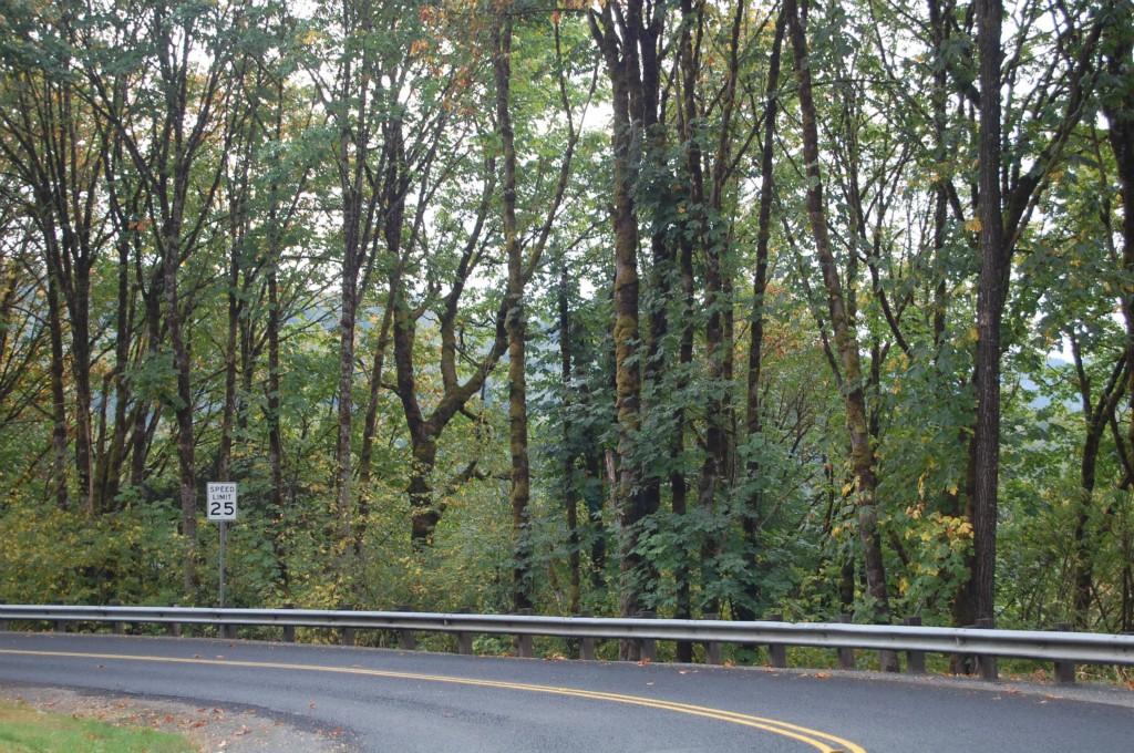 1 Merwin Village Rd , Woodland, WA - USA (photo 4)