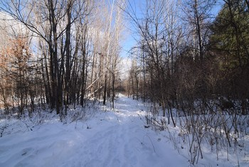 Hunters Paradise...40 Acres of heavy woods.  1320 ft of road frontage on Stewart Rd. (photo 1)