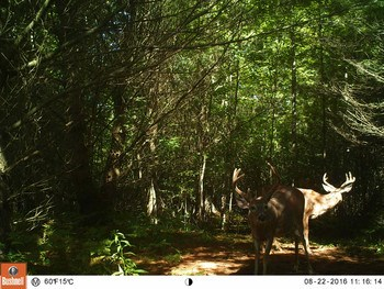 Views from the trail camera this year (photo 2)