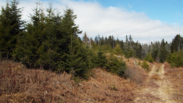 Lot J5 Flat Hill Road, Broad Cove, NS - CAN (photo 5)