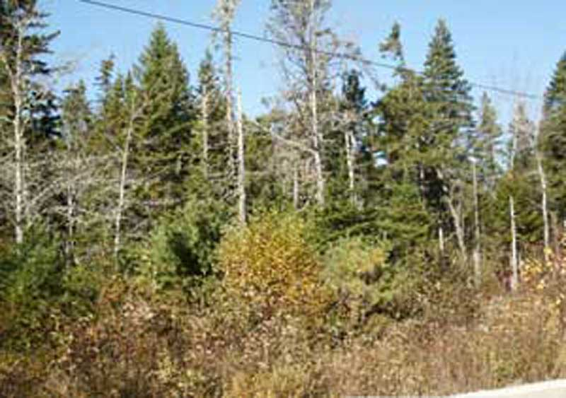 Lot 109 Chester Grant Road, Chester Grant, NS - CAN (photo 1)