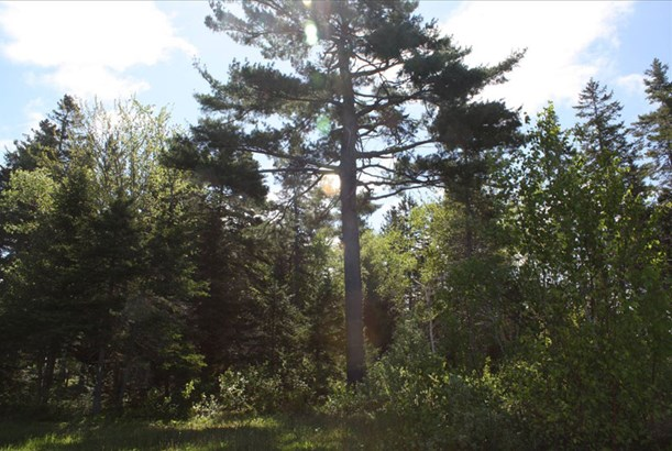Lot 2 Island Road Extension, Malagash, NS - CAN (photo 5)