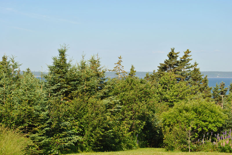 Lot 2 Amys, Hackett's Cove, NS - CAN (photo 5)