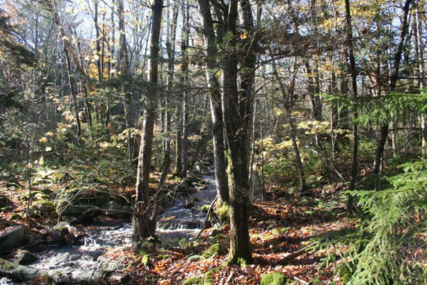 Lot 4 Hwy 329 , Mill Cove, NS - CAN (photo 1)