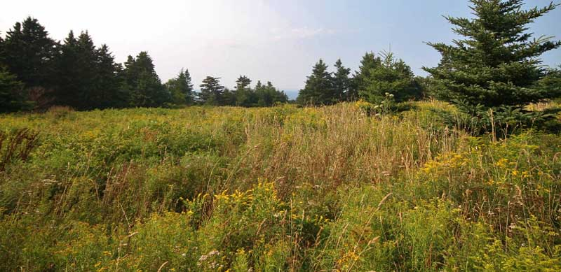 7787 Route 1, Meteghan, NS - CAN (photo 4)