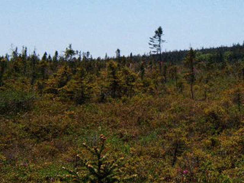 Hwy 217, Central Grove, NS - CAN (photo 5)