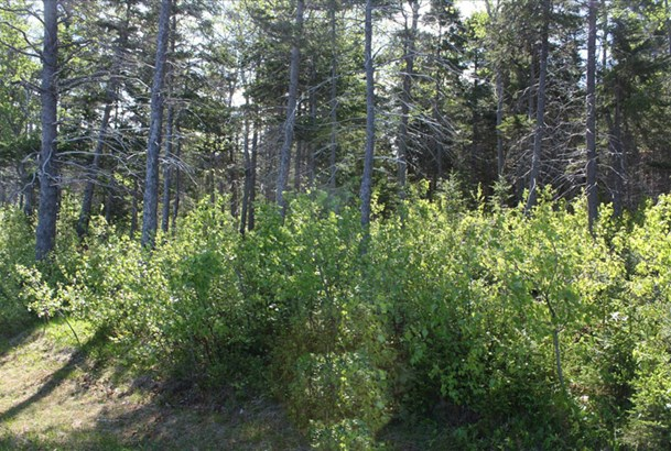 Lot 3 Island Road Extension, Malagash, NS - CAN (photo 5)
