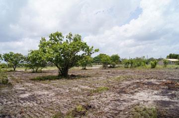 Burrell Boom Village, Belize District, Belize, Burrell Boom Village - BLZ (photo 1)