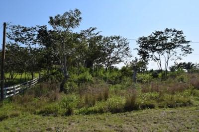 Mountain View Area, Belmopan, Cayo District, Beliz, Belmopan - BLZ (photo 3)