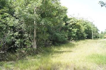 Ridge Lagoon Estate, Burrell Boom - BLZ (photo 1)