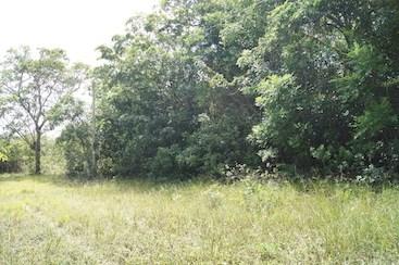 Ridge Lagoon Estate, Burrell Boom - BLZ (photo 2)