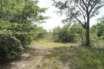 Ridge Lagoon Estate, Burrell Boom - BLZ (photo 4)