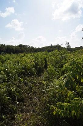 Old Northern Highway, Belize - BLZ (photo 3)