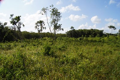 Old Northern Highway, Belize - BLZ (photo 4)
