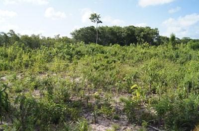 Old Northern Highway, Belize - BLZ (photo 5)