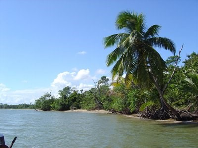 South Of Monkey River-north Of Punta Negra, Punta Negra - BLZ (photo 3)
