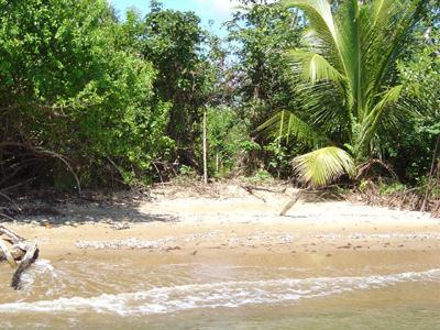 South Of Monkey River-north Of Punta Negra, Punta Negra - BLZ (photo 4)