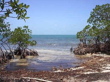 Cross Caye, Stann Creek District, Belize, Stann Creek - BLZ (photo 3)