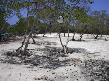 Cross Caye, Stann Creek District, Belize, Stann Creek - BLZ (photo 5)