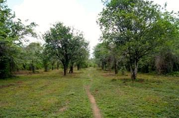 Mile 2 Sibun Road , Freetown Sibun / Hattieville - BLZ (photo 4)
