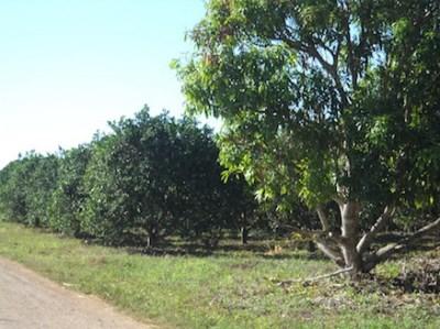 1.5 Miles West Of , Xaibe Village - BLZ (photo 2)