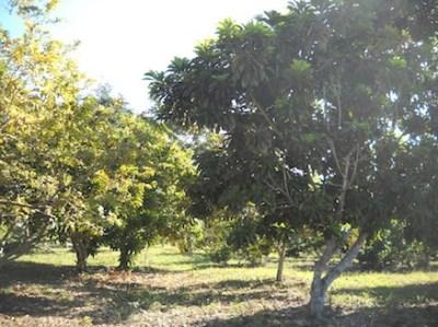1.5 Miles West Of , Xaibe Village - BLZ (photo 4)