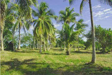 Warrie Bight, Chetumal Bay - BLZ (photo 3)