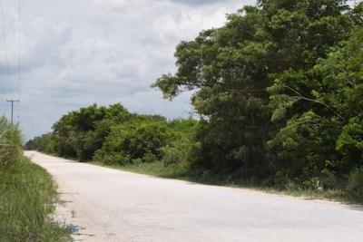 Junction Corozal/progresso Road - Between Pueblo N, Saltillo - BLZ (photo 4)