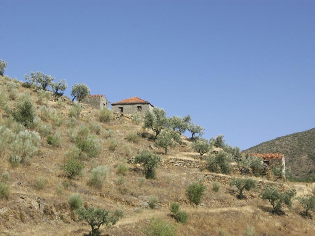 Torre De Moncorvo - PRT (photo 5)