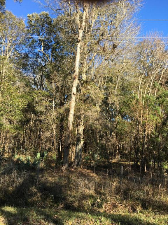 Resident S/D Lot - Hardeeville, SC (photo 4)