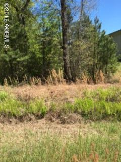 Acreage/Farm Plantation - Hardeeville, SC (photo 4)