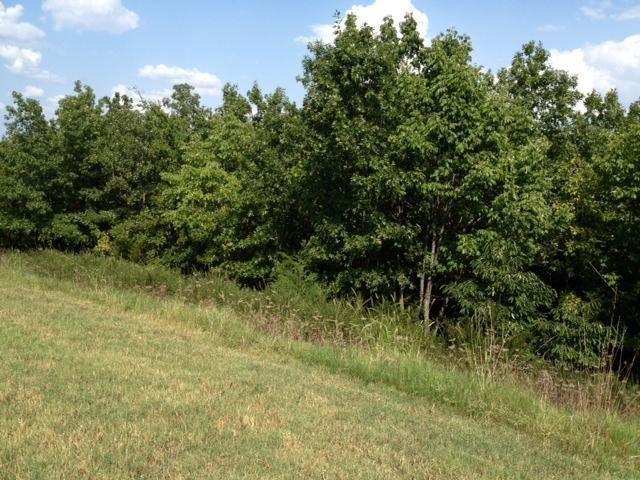 140 Forest Oak Drive 2, Hollister, MO - USA (photo 4)