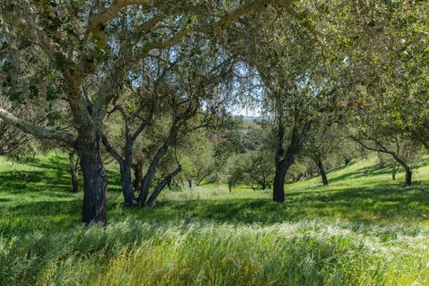 Oak Trail Ranch Road, Santa Ynez, CA - USA (photo 2)