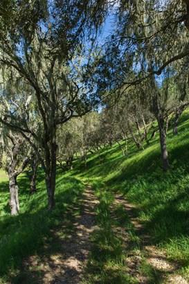 Oak Trail Ranch Road, Santa Ynez, CA - USA (photo 5)