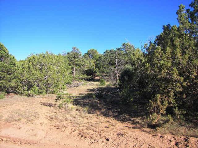 Residential Lot - Ilfeld, NM (photo 3)
