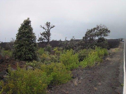 92-2410 Aloha Blvd 2, Ocean View, HI - USA (photo 3)