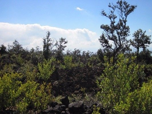 92-2416 Aloha Blvd 3, Ocean View, HI - USA (photo 1)
