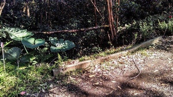 46-3739 Puaono Rd 9, Honokaa, HI - USA (photo 4)