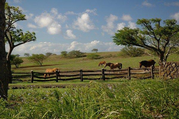 Pualani Road 1-a, Hawi, HI - USA (photo 2)