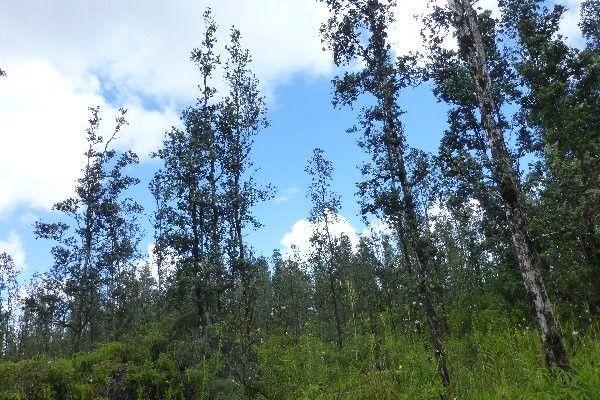 Road 5 (uau) 3970, Mountain View, HI - USA (photo 5)