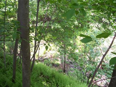 0 Wilber Lake Road, Oneonta, NY - USA (photo 4)